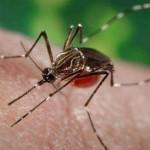 tenerife crowfunding mosquito2015