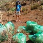tenerife Voluntariado Ambiental 2016