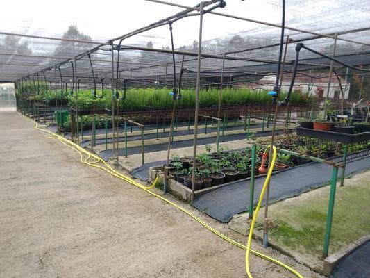 160.000 plantas anuales para la repoblación de Gran Canaria