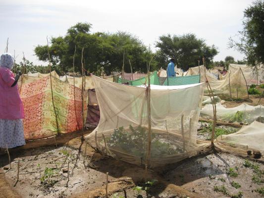 Medio centenar de ONG reciben los fondos de cooperación internacional