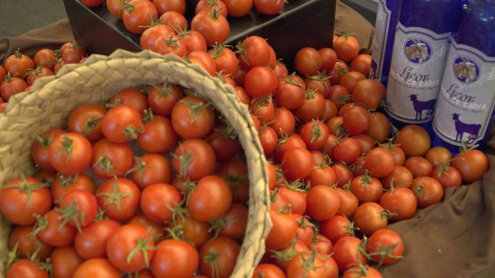 Los productores de tomate de exportación, reciben el abono del POSRI