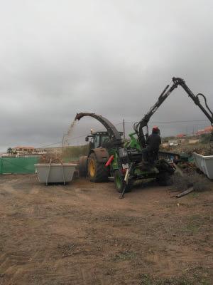 Comienza a triturar restos de poda afectados por la termita subterránea