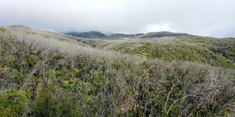 Se restaurarán hábitats degradados del Parque Nacional de Garajonay