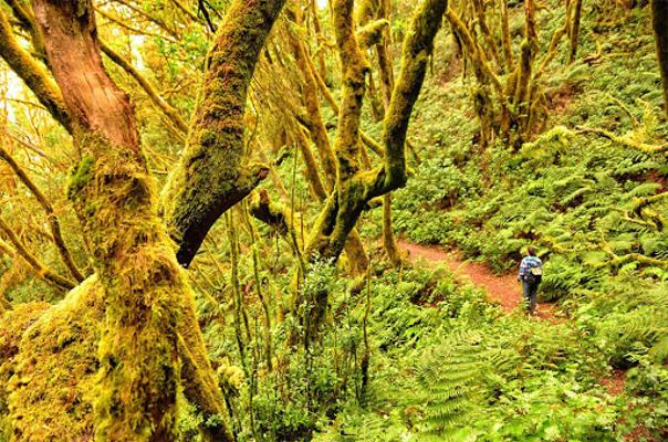 El Cabildo reconoce la labor del Organismo de Parques Nacionales