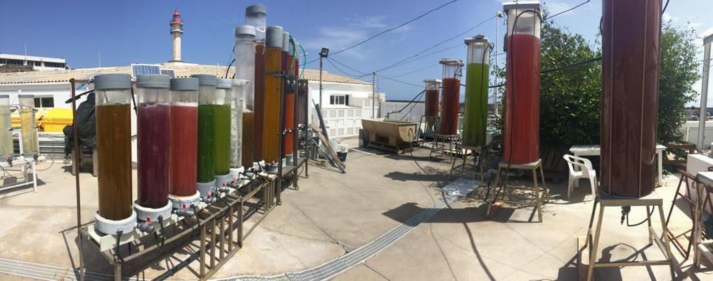 El Banco Español de Algas participa en una investigación de biofiltración
