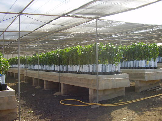 Campaña para entregar árboles frutales a los agricultores de Gran Canaria