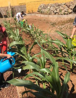 23 proyectos educativos para alumnado de Infantil a Secundaria