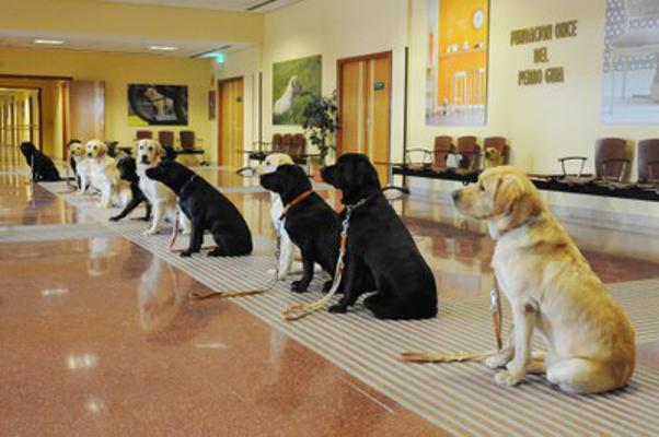 Reglamento de perros de asistencia para personas con discapacidad