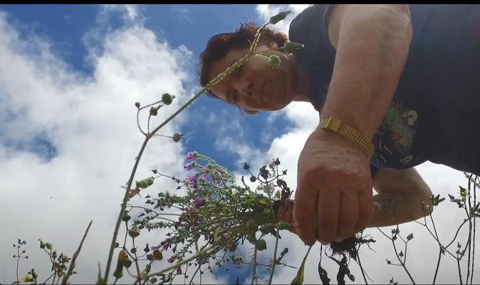 Las plantas silvestres en Gran Canaria desde los aborígenes