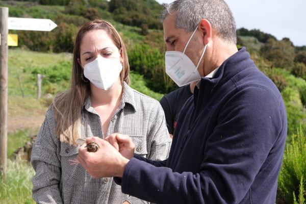 Por el hábitat contribuye a la recuperación de la codorniz en La Palma