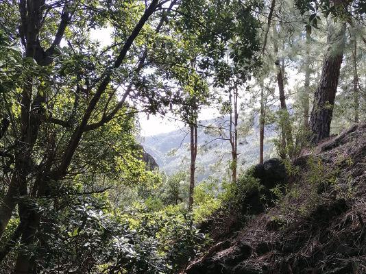 Recuperación del bosque termófilo con la plantación de 20 mil ejemplares