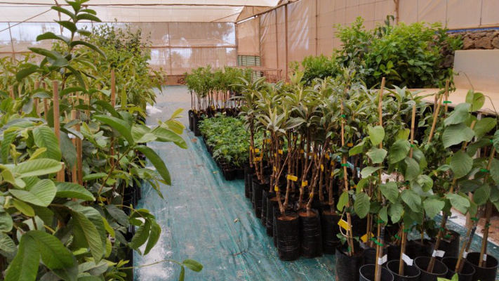 Nueva campaña de venta de árboles frutales con más de 1.000 ejemplares