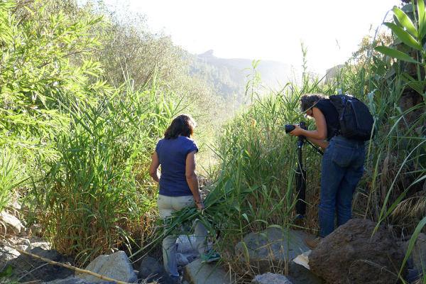 Testimonios de las mujeres de espacios forestales y ambientales